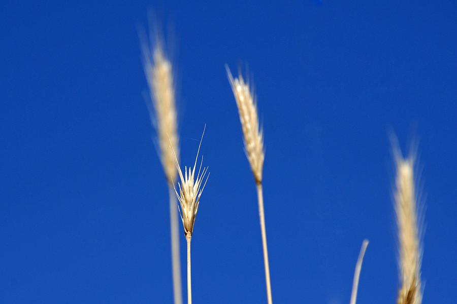 http://www.bahnbilder.ch/pictures/medium/9042.jpg